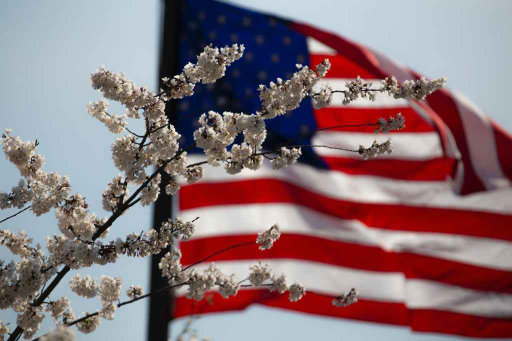 American flag with cherry blossoms.