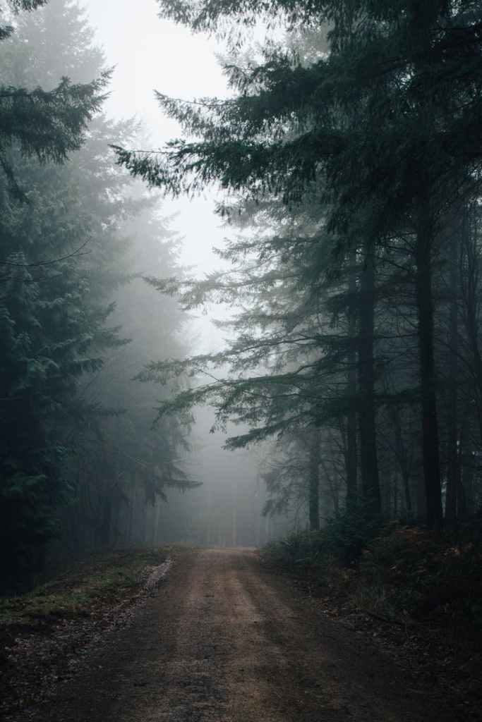 Cloudy forest road.